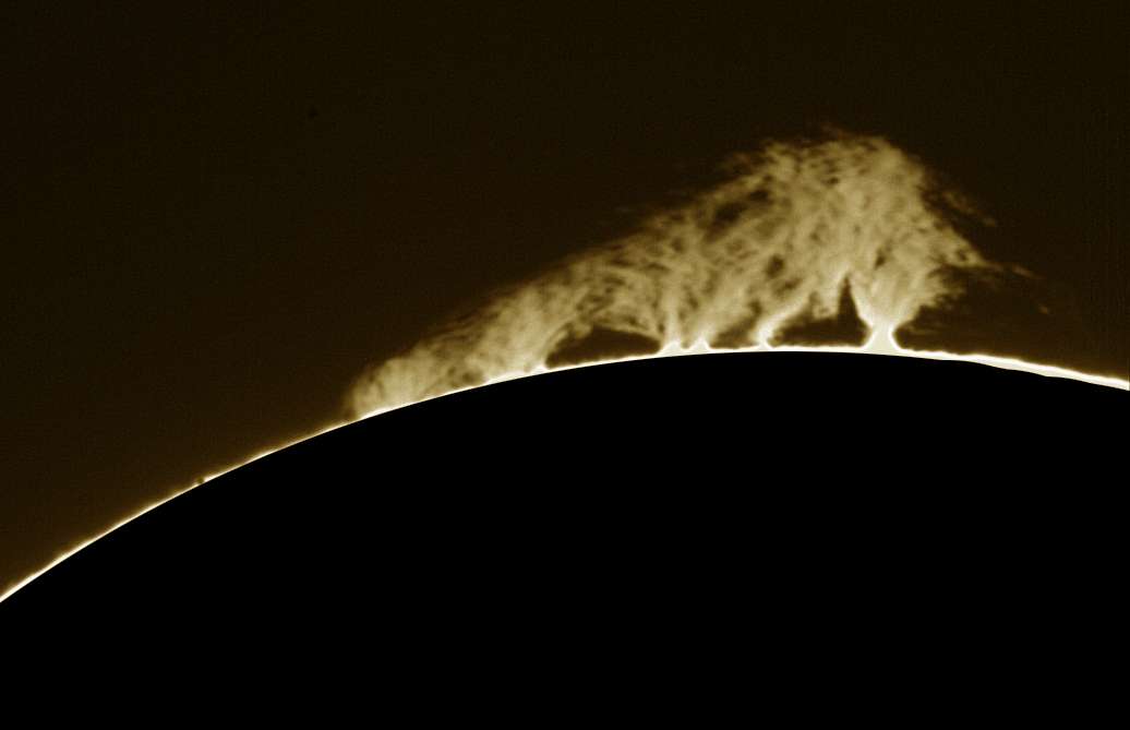 Hedgerow prominence 23-04-2015